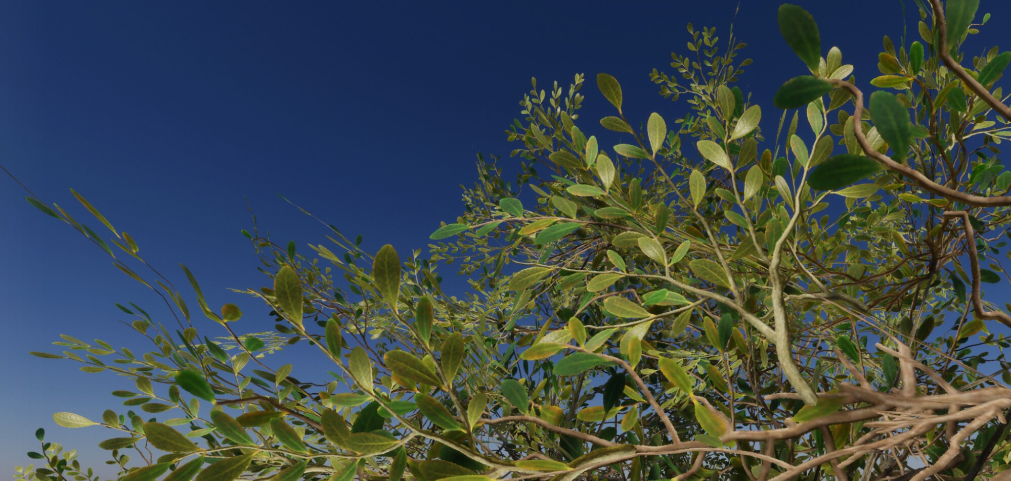 The top of some trees and a blue sky made with Unity